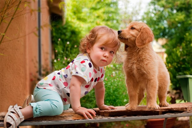 Are dogs replacing children? Looks that way.